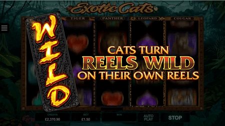 Exotic Cats slot features