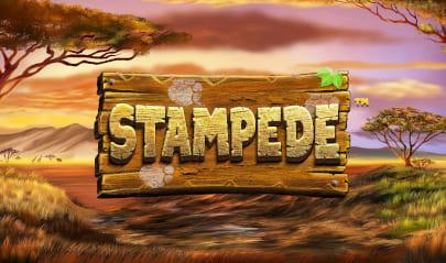 Stampede Logo Big